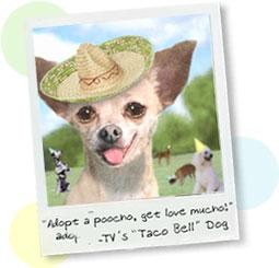 Tacobell Dog