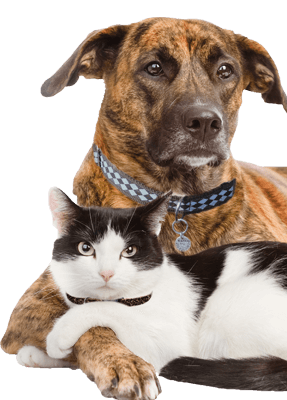 adopt a dog or cat today search for local pets in need of